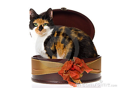 calico-cat-inside-brown-gift-box-10143493.jpg