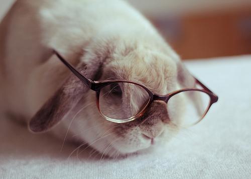 bunny-with-glasses-milkbeforebed-tumblr-com.jpg