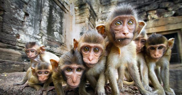 curiousbabymonkeys.jpg.600x315_q80_crop-smart.jpg.jpg