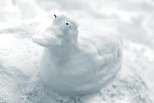 snegovaya-utka.jpg