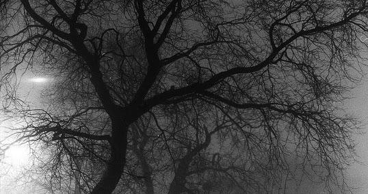 chicago-fog-at-night-by-emily-barney-fcc.jpg.jpg