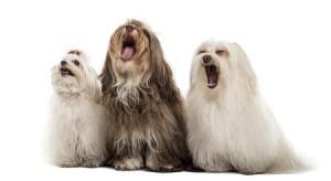 barking-dogs1-300x164.jpg