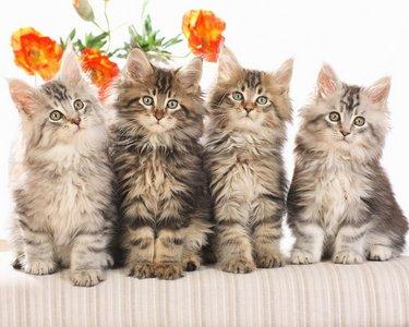 Cat-wallpaper-1.jpg