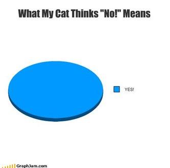cat_no.jpg