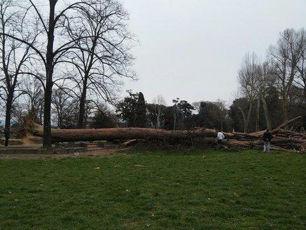 albero2.jpg