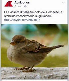 ADNKronos_Passera.jpg