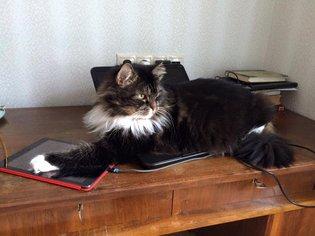 коткам.jpg