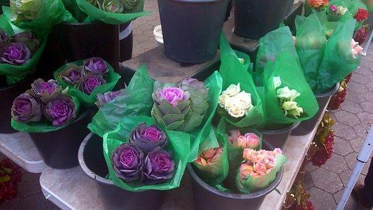 cabbage-decor-DSC_0008.jpg