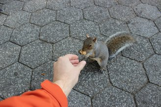 first-person-squirrel-0438.JPG