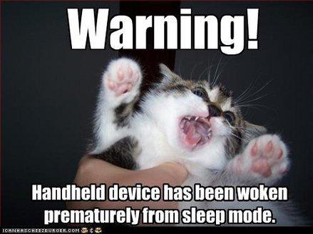 funny-pictures-cat-has-been-woken_1_.jpg