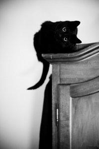 arivona-cat1.jpg