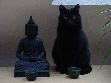 buddacat.jpg