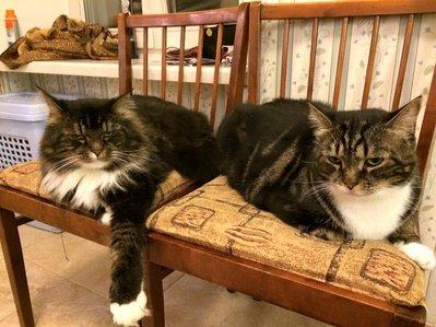 коты.jpg