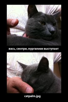 catpalm.jpg