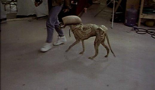 alien_dog.jpg