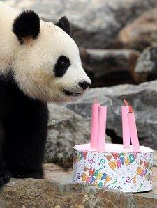 panda_birthday.jpg