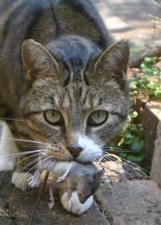 Cat_mouse.jpg