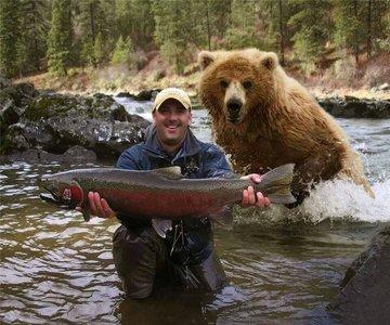 bear_and_salmon.jpg