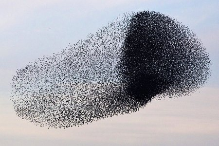 other-times-youll-see-a-densely-packed-group-amid-the-rest-of-the-flock-like-the-darker-clump-toward-the-right-of-this-murmuration.jpg