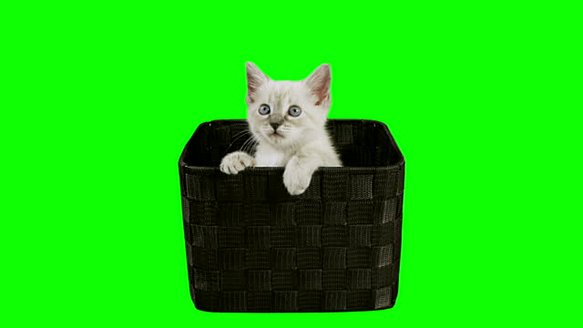 stock-video-20341807-kitten-in-box-green-screen-hd-.jpg