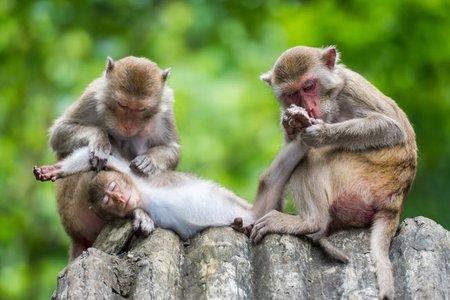 monkeyfacts-grooming.jpg.653x0_q80_crop-smart.jpg