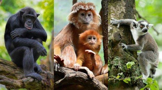 monkeyfacts-apemonkeylemur.jpg.653x0_q80_crop-smart.jpg