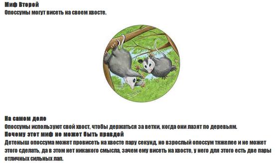 possum.png
