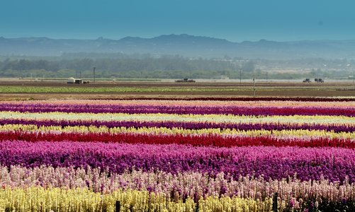 fields-of-flowers-07.jpg.jpg