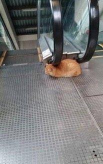 metro-cat.jpg