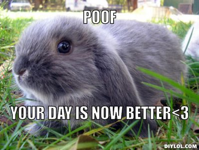 dwarf-bunny-meme-generator-poof-your-day-is-now-better-3-0ef3ee.jpg