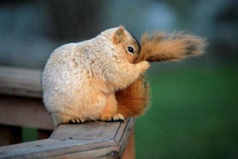 1316762681_squirrel_45-1.jpg