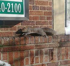 squirrel-over-wall-DSC_0030.jpg