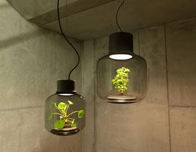 mygdal-hanging-plantlights.gif.gif