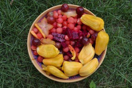 Fruit_Salad_D_Feb_2016_27.jpg