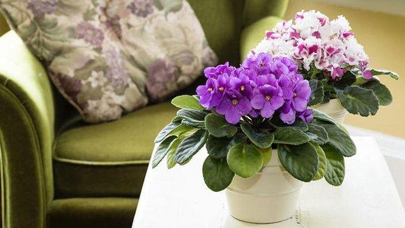 darkplants-violet-885.jpg
