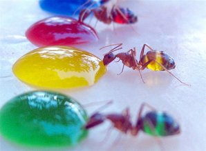 Ant-eating-yellow-634x466.jpg