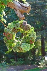 instructions-on-how-to-make-this-beautiful-succulent-wreath-a5.jpg
