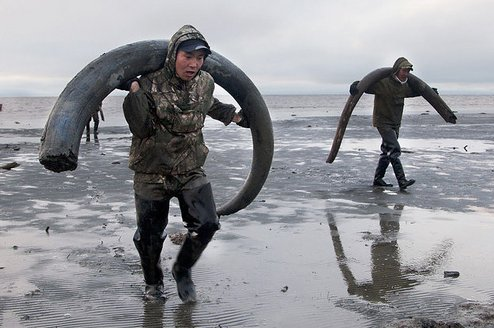 hunting-for-the-elusive-woolly-mammoth-2-11502-1426021329-55_dblbig.jpg.jpg