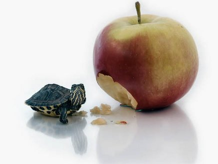 turtle-and-apple_1_.jpg