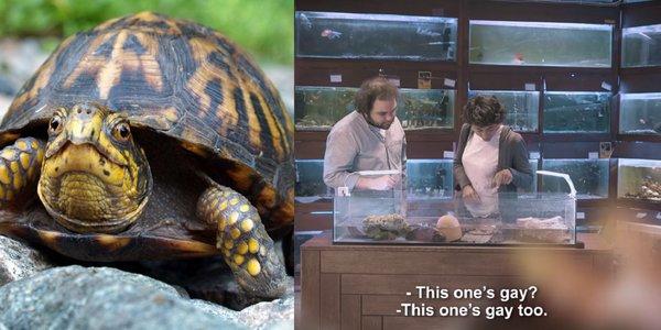 turtle2.jpg.jpg