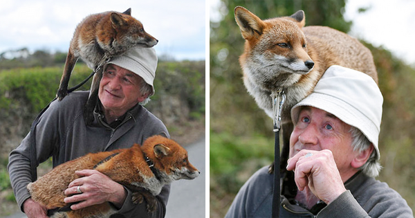 pet-foxes-rescue-patsy-gibbons-ireland-fb.png.png