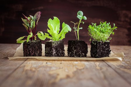 spring-into-composting.jpg.jpg