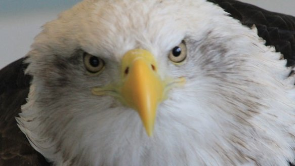 Eagle.jpg.jpg