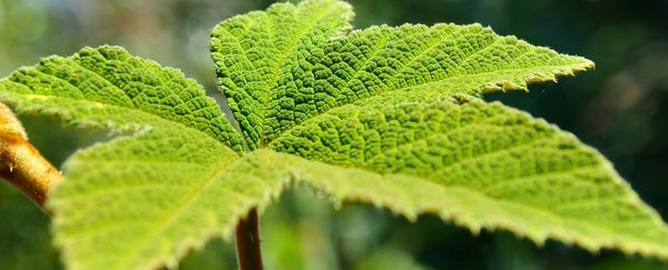 Plant_web_1024.jpg.jpg