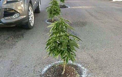 potholes-with-pot-1024x647.jpg.jpg