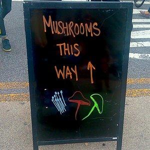 DSC_0008_mushrooms-this-way.jpeg