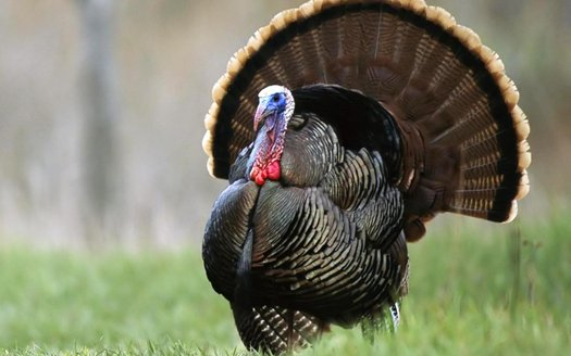 turkey8.jpg.jpg