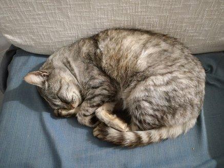Resident_cat.jpg