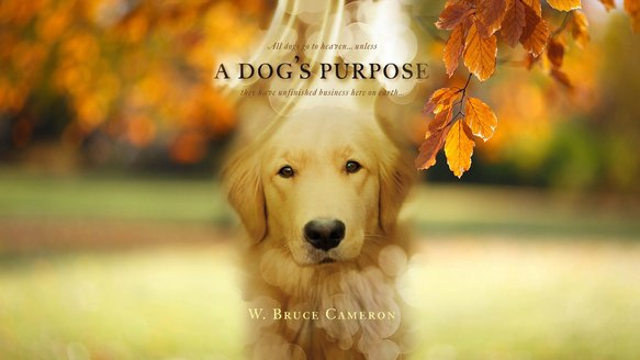 A-Dogs-Purpose-Movie-wallpaper-HD-film-2017-poster-image.jpg