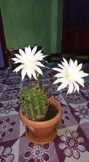 FB_IMG_1494926817591.jpg